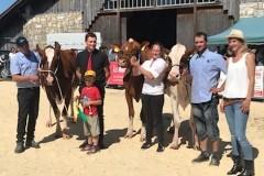 Marché concours bovin - Saignelégier - Août 2019
