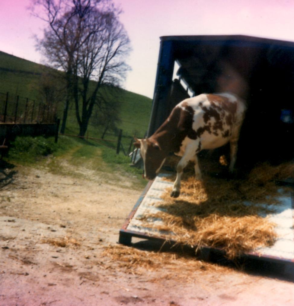 Démarrage de l'activité agricole et commerce de bétail